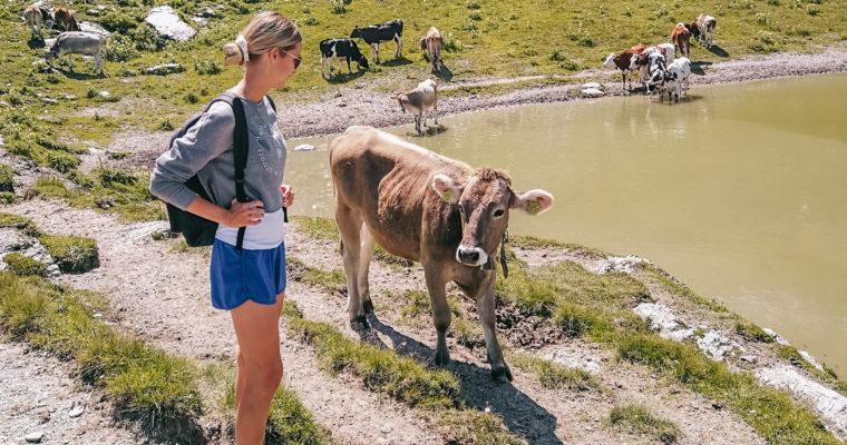 Warum Milch das Klima killt und welche Alternativen wirklich besser sind