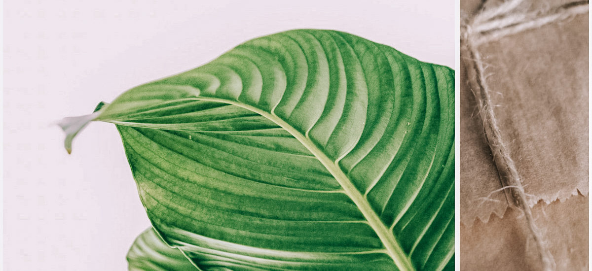 Green Gift Guide: Nachhaltige und sinnvolle Geschenke für jedes Budget