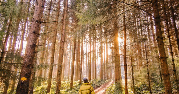 Umweltbewusst reisen – wie die Krise unsere Urlaubsplanung nachhaltig beeinflussen wird